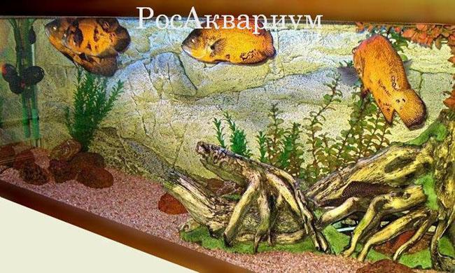 Рос РосАквариум, Рос Аквариум, Растет в аквариуме.
